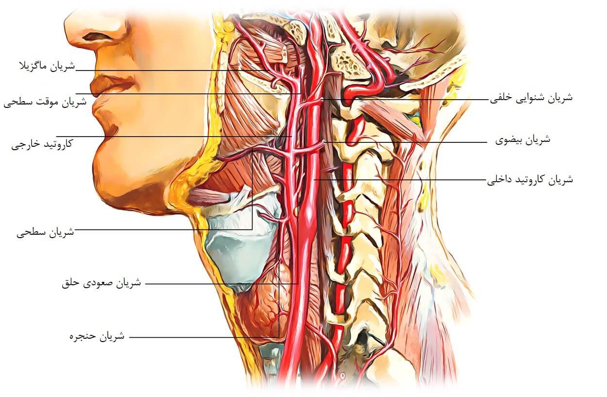 تنگی شریان کاروتید (کاروتید اندآرترکتومی) - وب سایت شخصی دکتر سرزعیم